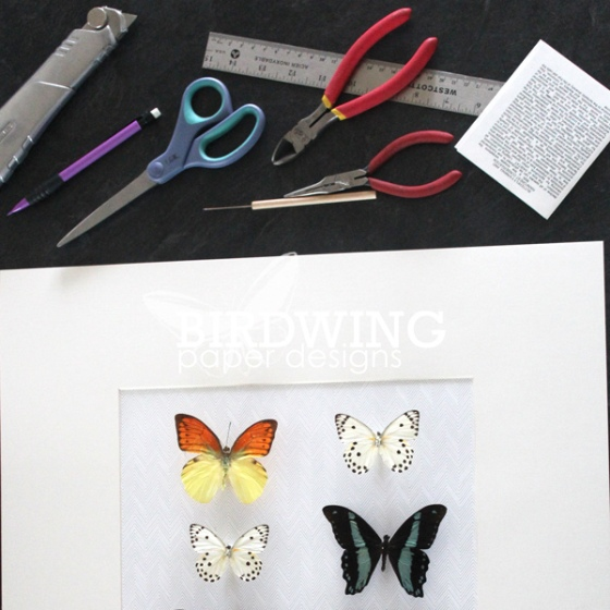 Modernizing a Butterfly Collection - Birdwing Paper Designs