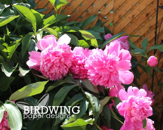 Five Garden Favourites - Birdwing Paper Designs
